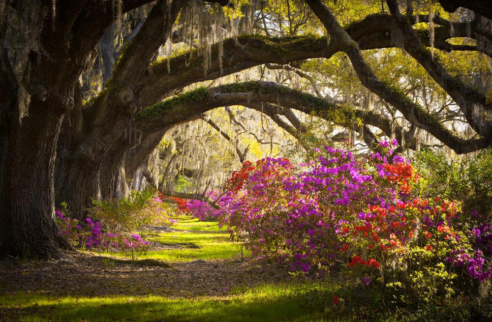 Charleston Plantation