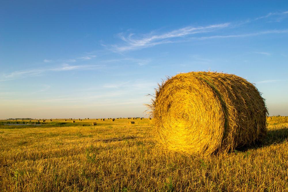 Hay Bale North Dakota