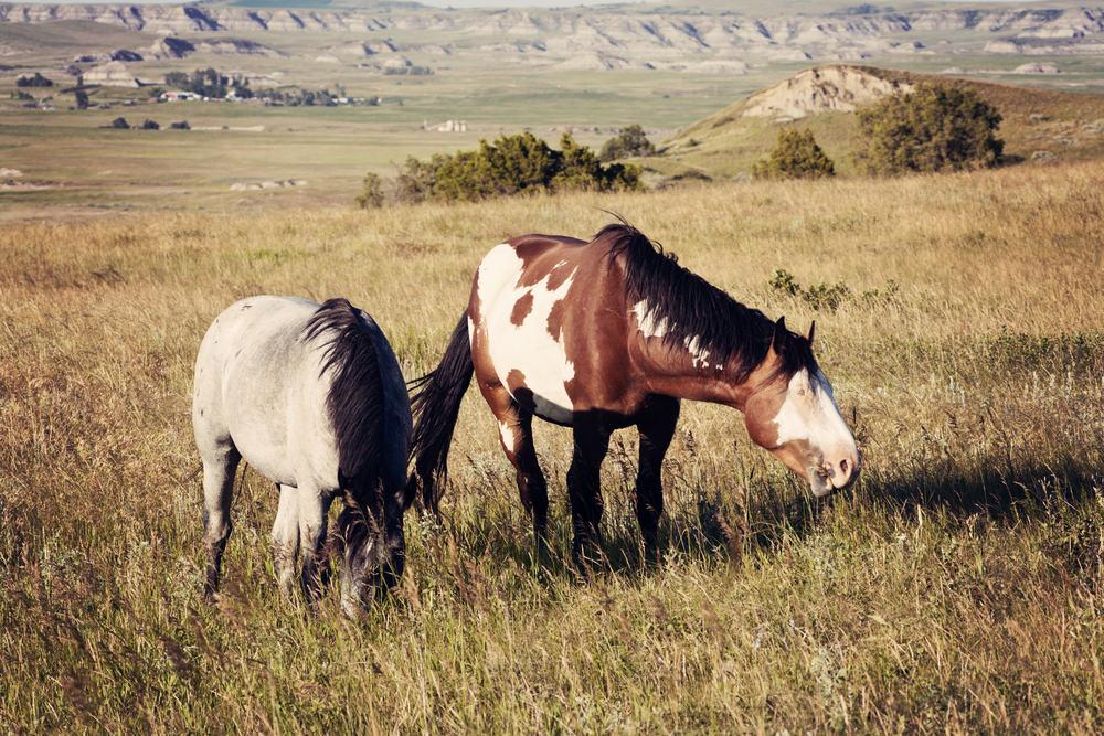 Horses ND