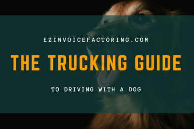 guide to driving with a dog
