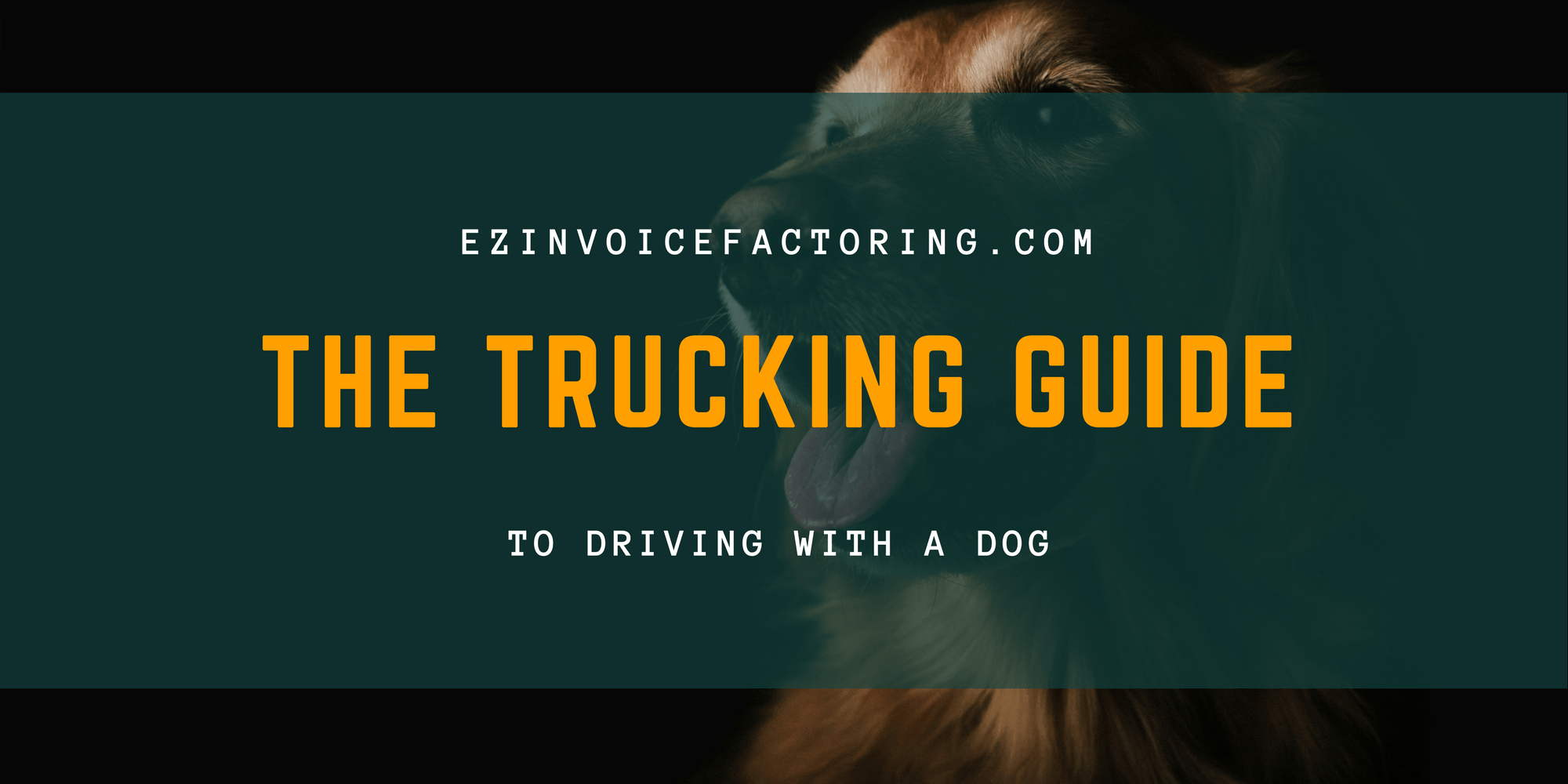 Trucking with a Dog | What You Should Know