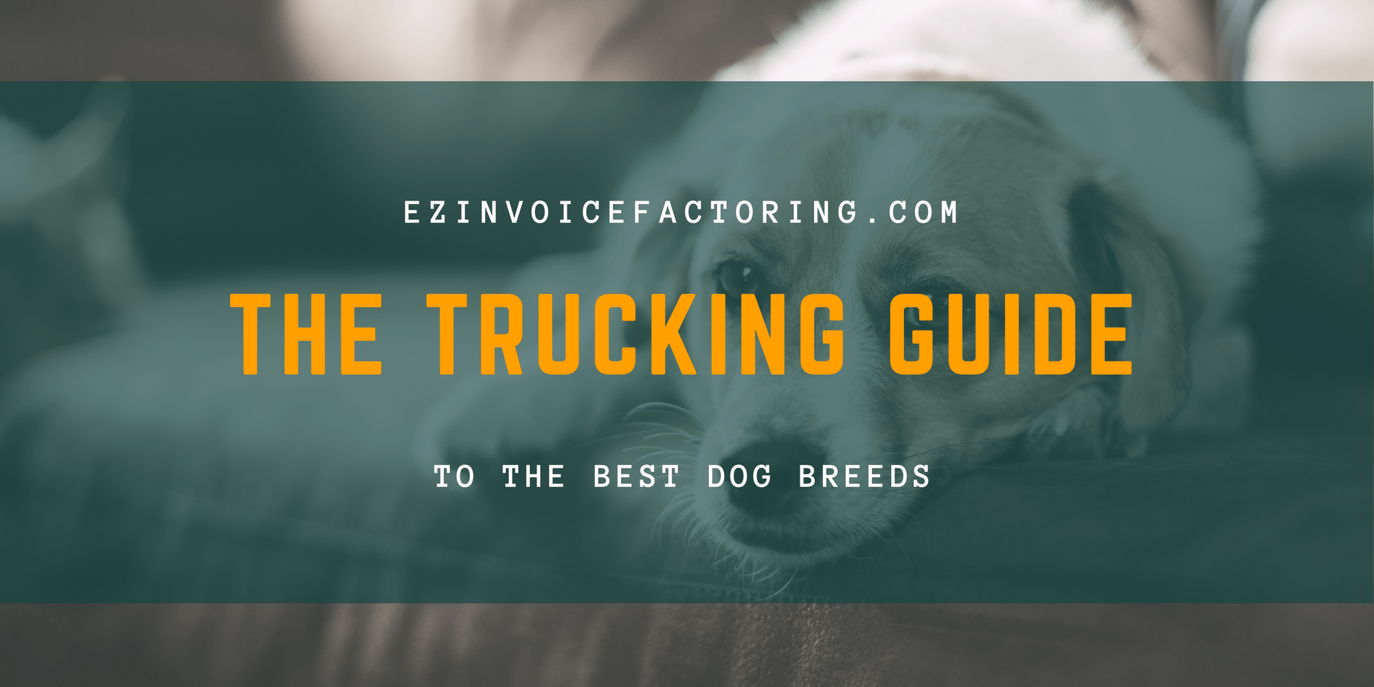 The Best Dog Breeds for Truck Drivers